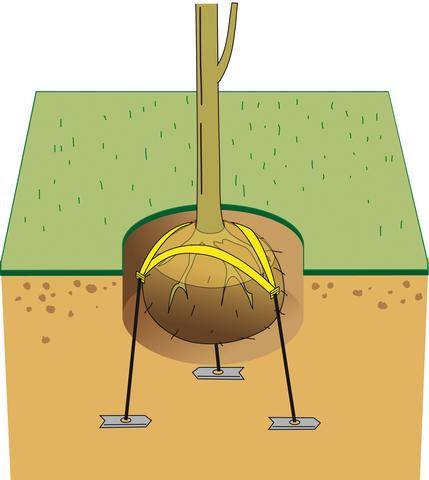 Root Ball Anchoring Greenmax
